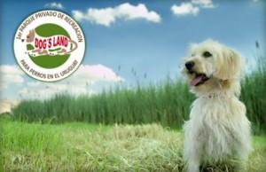 Pensión para tu perro en Doglandspark Chacra Verdeclaro $ 120.-