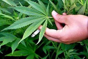 Resumen del proyecto de legalización del cultivo y venta de Marihuana en Uruguay