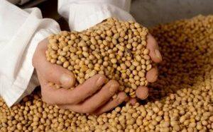 La siembra de Soja llegó a su máximo histórico en el 2013
