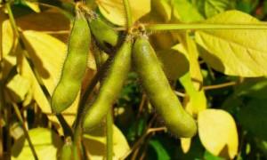 la soja Paraguaya seguirá pasando por Nueva Palmira a pesar de las trabas de Argentina