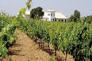 Problemas en el sector vitivinícola uruguayo