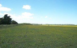 Inversores extranjeros sienten atracción por las tierras uruguayas