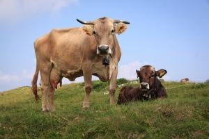 La exportación de carne uruguaya pasa por su mejor momento
