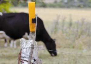 14-07-2015 Lechería y ganadería de Flores en emergencia