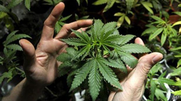 21-09-2015 Nuevo decreto regula comercialización del cannabis en Uruguay