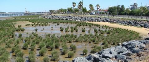Restauración de las marismas en el puerto de Huelva