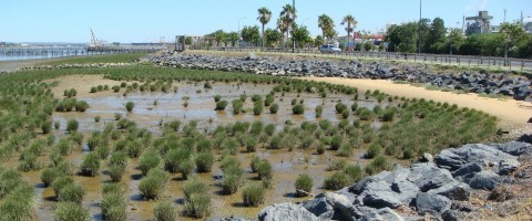 Restauración de las marismas de Huelva